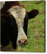 Head Of A Bull On A Farm Canvas Print
