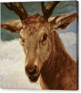 Head Of A Stag Canvas Print