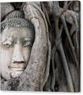 Head Of Buddha Statue In The Tree Roots Canvas Print