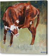Head-scratching Heifer Pad Canvas Print