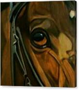 Head Stall Canvas Print