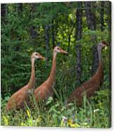 Headed For The Woods Canvas Print