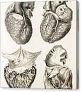 Heart, Anatomical Illustration, 1814 Canvas Print