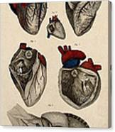 Heart, Anatomical Illustration, 1822 Canvas Print