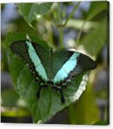 Heart Leaf Butterfly Canvas Print