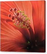 Heart Of Hibiscus Canvas Print