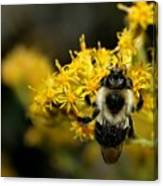 Heart Of The Bee Canvas Print