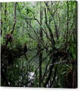 Heart Of The Swamp Canvas Print