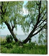 Heart Tree On Lake Saint Clair Canvas Print