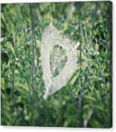 Hearts In Nature - Heart Shaped Web Canvas Print