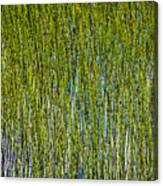 Heather Lake Grass Canvas Print