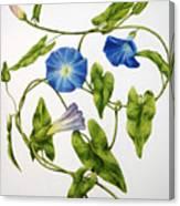 Heavenly Blue Morning Glory Canvas Print