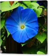 Heavenly Blue Canvas Print
