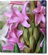 Heavenly Hyacinths Canvas Print