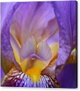 Heavenly Iris Canvas Print