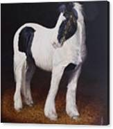 Heavy Stallion  Glin Fair Canvas Print