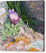 Hedgehog Cacti Canvas Print