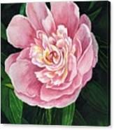 Heirloom Beauty Canvas Print