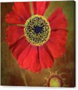 Helenium Beauty Canvas Print