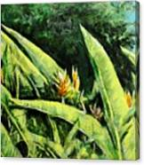 Heliconia Flowers 6 Canvas Print