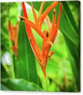 Heliconia Psittacorum Canvas Print
