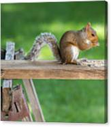 Hello Are You Gonna Eat All That? Chipmunk And Squirrel Canvas Print