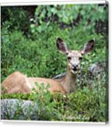 Hello From A Deer Canvas Print