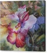 Hello Gorgeous Canvas Print
