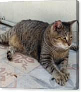 Hemingway Polydactyl Cat Canvas Print