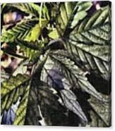 Hemp Canvas Print