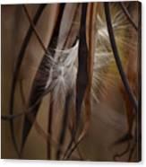 Hemp Dogbane Seeds Canvas Print