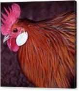 Hen Chicken, Digital Paint Canvas Print