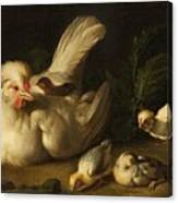Hen With Chicks Canvas Print