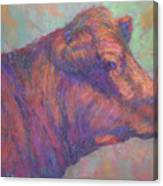 Henry's Red Angus Canvas Print