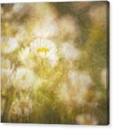Her Beauty Alone Canvas Print