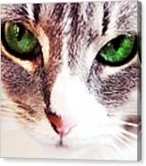 Her Emerald Eyes. Kitty Time Canvas Print