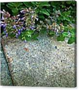 Herb Garden Walkway Canvas Print