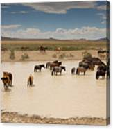 Herd At A Waterhole Canvas Print