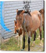 Herd Of Horses On A Street Canvas Print