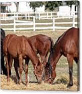 Herd Of Horses Ranch Scene Canvas Print