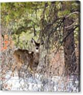 Herd Of Mule Deer In Deep Snow Canvas Print