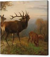 Herd Of Red Deer Canvas Print