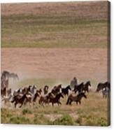 Herd On The Move Canvas Print