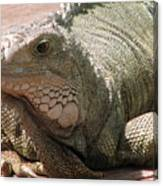 Here Leezard Leezard Canvas Print