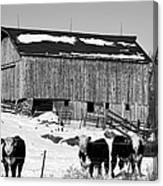 Hereford Barn Bw Canvas Print