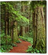 Heritage Forest 2 Canvas Print