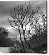 Hermit Island Tree 0192 Canvas Print