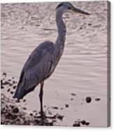 Heron And Grey Water Canvas Print