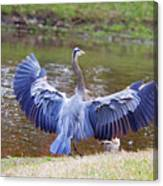 Heron Bank Landing Canvas Print