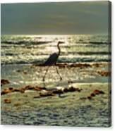 Heron Beachwalk Canvas Print